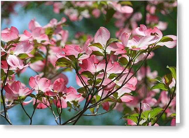 Dogwood Tree Greeting Card by Laurel Gillespie