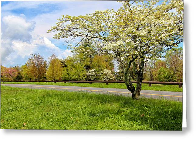 Dogwoods At Dickey Ridge Greeting Card