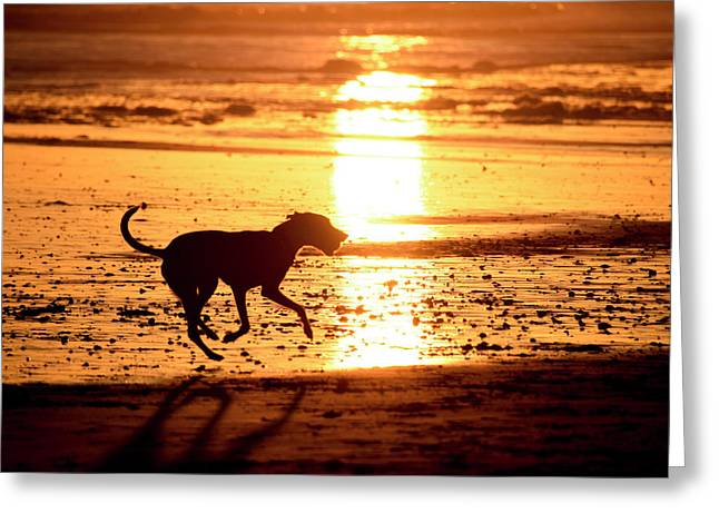 Doh At Sunset In  Silhouette Greeting Card
