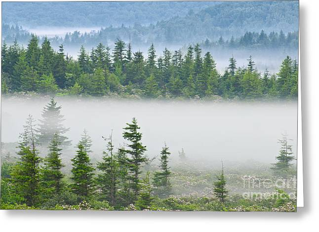 Dolly Sods Wilderness D300_10363 Greeting Card by Kevin Funk