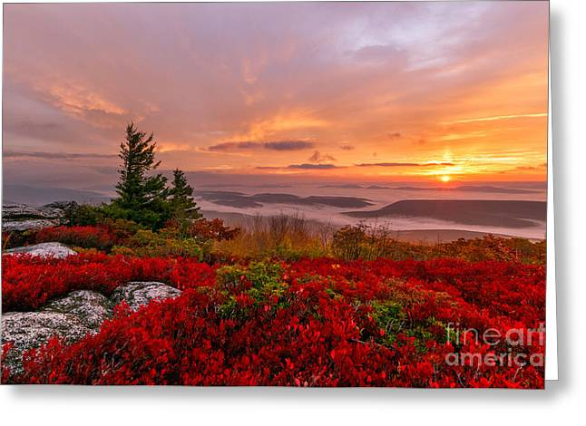Dolly Sods Wilderness D300_18266 Greeting Card by Kevin Funk