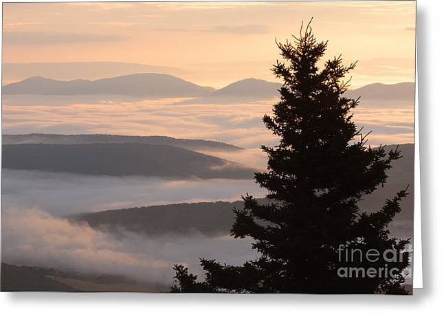 Dolly Sods Wilderness D300_18443 Greeting Card by Kevin Funk
