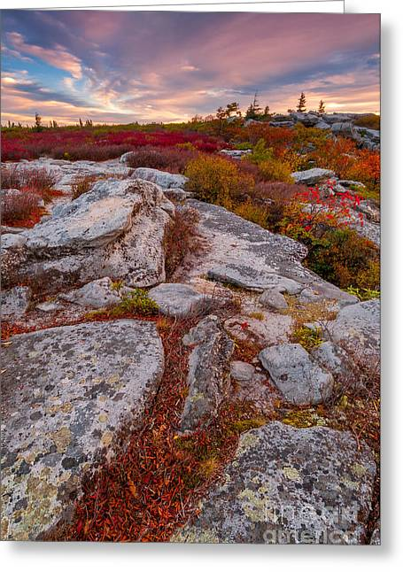 Dolly Sods Wilderness D30019841 Greeting Card by Kevin Funk