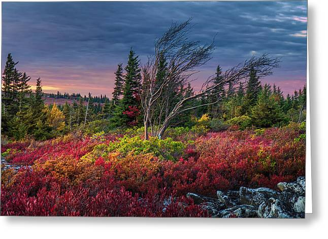 Dolly Sods Windswept Sunset Greeting Card by Mary Almond