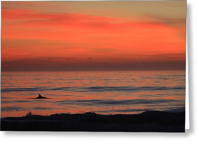 Dolphin At Cape Hatteras Greeting Card by Mountains to the Sea Photo