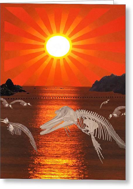 Dolphin Bay Taiji Cove Greeting Card