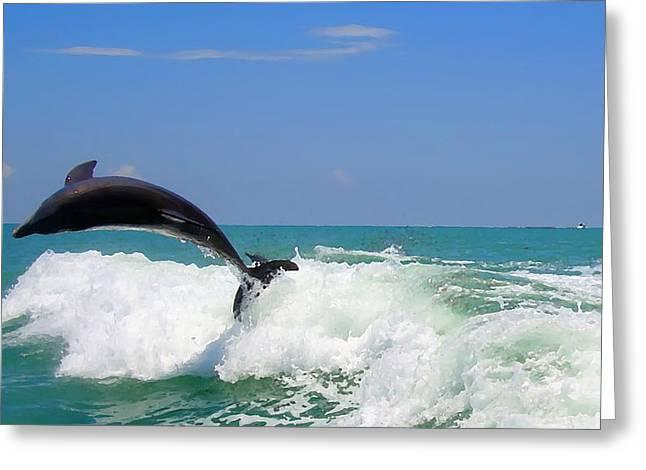Dolphin Flip 2 Greeting Card by Kara  Stewart