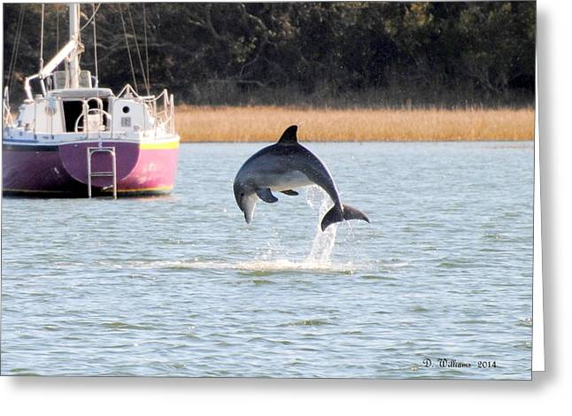 Dolphin Jumping In Taylors Creek Greeting Card
