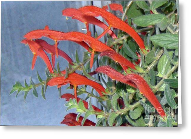 Greeting Card featuring the photograph Dolphin Plant by Brenda Brown
