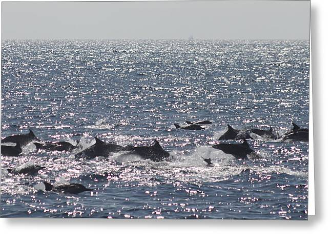 Dolphin Pod Greeting Card by Valerie Broesch