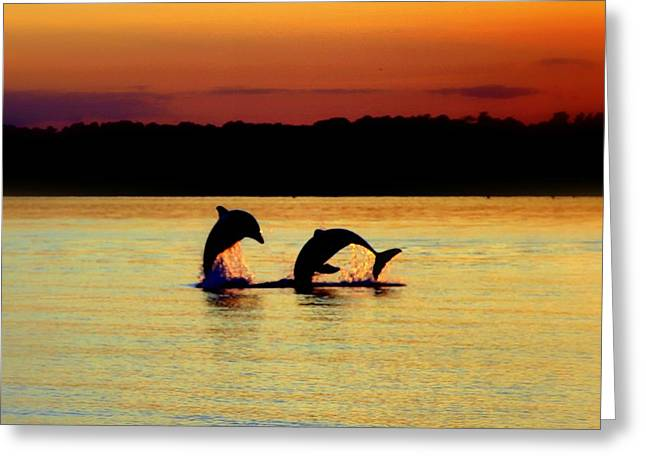 Dolphin Serenade Greeting Card by Karen Wiles