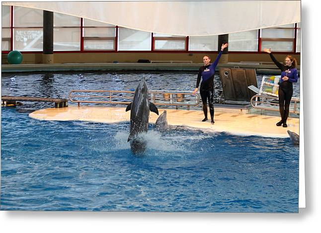 Dolphin Show - National Aquarium In Baltimore Md - 1212100 Greeting Card