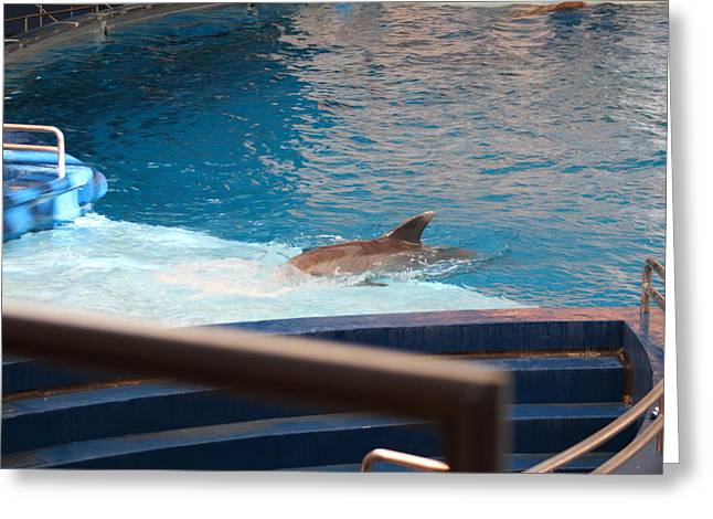 Dolphin Show - National Aquarium In Baltimore Md - 1212103 Greeting Card by DC Photographer