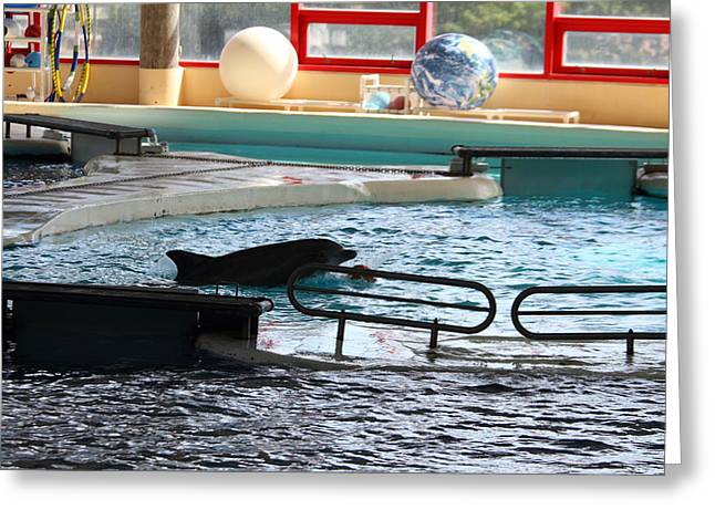 Dolphin Show - National Aquarium In Baltimore Md - 1212110 Greeting Card