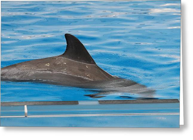 Dolphin Show - National Aquarium In Baltimore Md - 1212117 Greeting Card