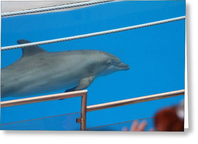Dolphin Show - National Aquarium In Baltimore Md - 1212121 Greeting Card by DC Photographer