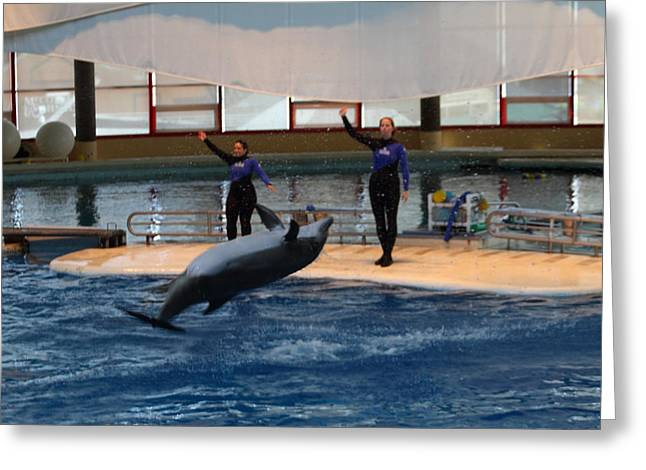 Dolphin Show - National Aquarium In Baltimore Md - 1212139 Greeting Card
