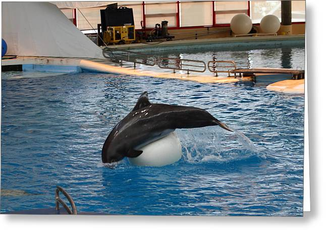 Dolphin Show - National Aquarium In Baltimore Md - 1212162 Greeting Card by DC Photographer