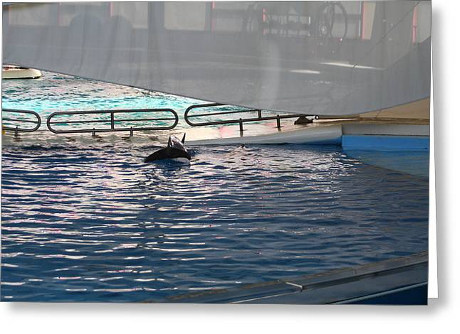 Dolphin Show - National Aquarium In Baltimore Md - 121218 Greeting Card by DC Photographer