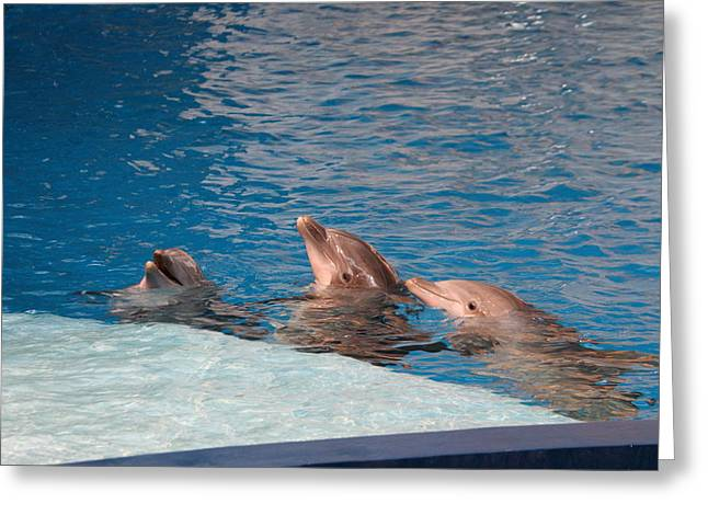 Dolphin Show - National Aquarium In Baltimore Md - 1212184 Greeting Card by DC Photographer