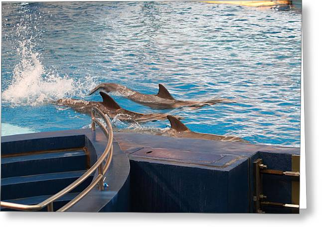 Dolphin Show - National Aquarium In Baltimore Md - 1212186 Greeting Card