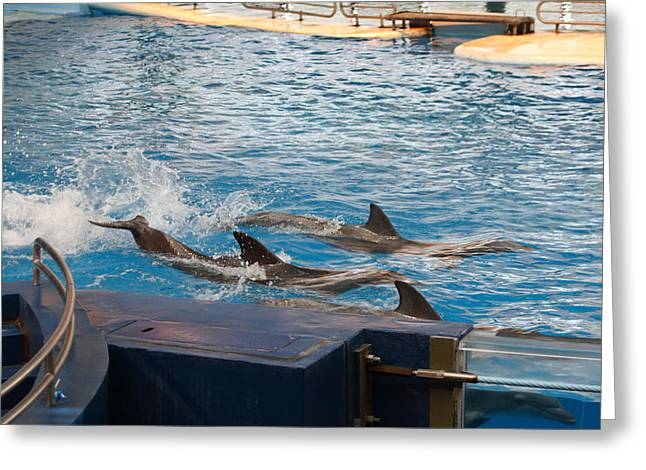 Dolphin Show - National Aquarium In Baltimore Md - 1212187 Greeting Card by DC Photographer