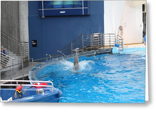 Dolphin Show - National Aquarium In Baltimore Md - 1212204 Greeting Card by DC Photographer