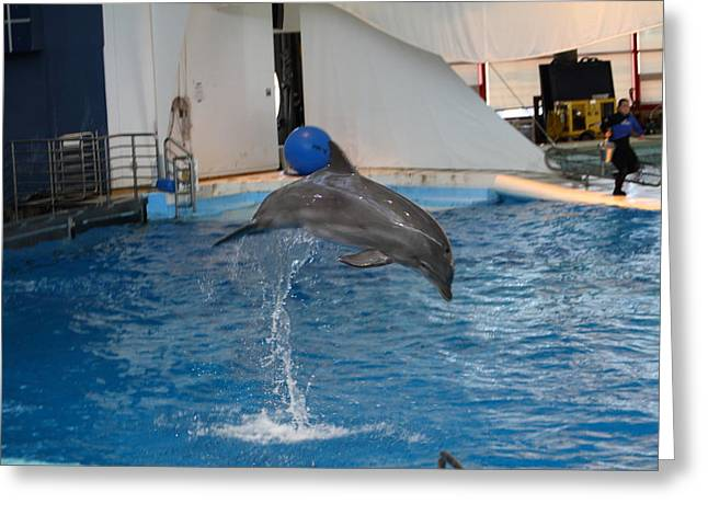 Dolphin Show - National Aquarium In Baltimore Md - 1212205 Greeting Card