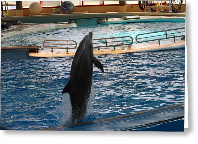 Dolphin Show - National Aquarium In Baltimore Md - 1212209 Greeting Card