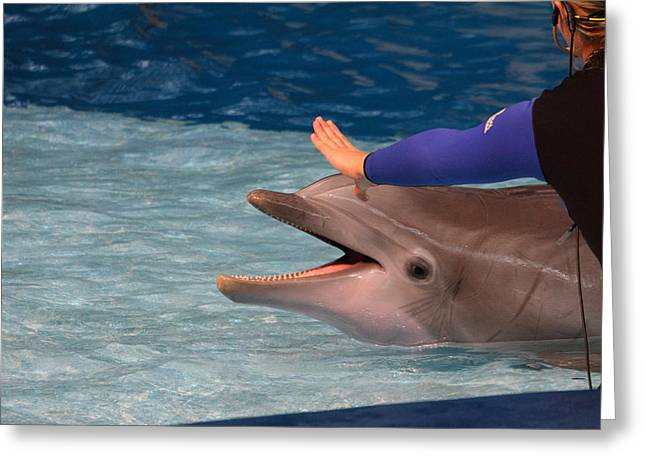 Dolphin Show - National Aquarium In Baltimore Md - 1212219 Greeting Card by DC Photographer