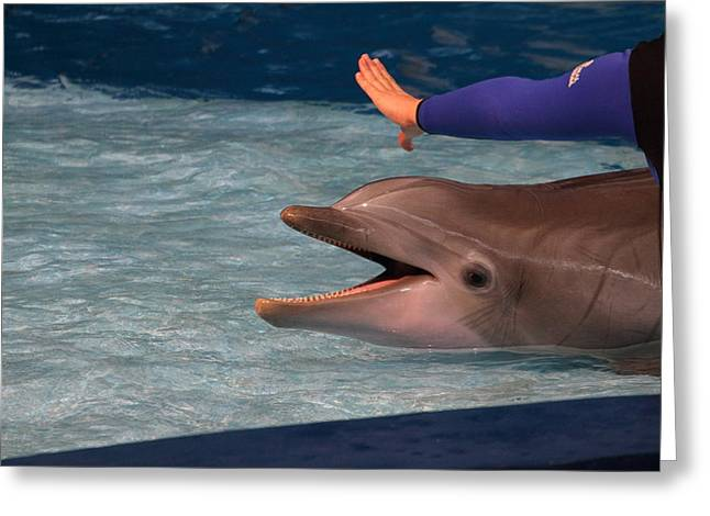 Dolphin Show - National Aquarium In Baltimore Md - 1212220 Greeting Card by DC Photographer