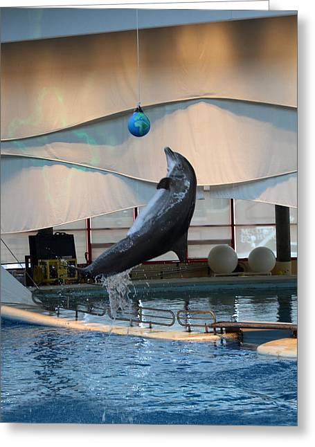 Dolphin Show - National Aquarium In Baltimore Md - 1212236 Greeting Card by DC Photographer