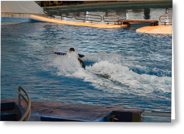 Dolphin Show - National Aquarium In Baltimore Md - 1212243 Greeting Card by DC Photographer