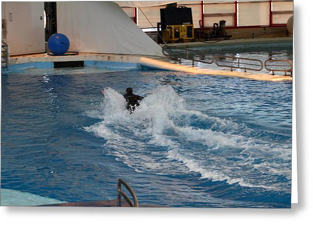 Dolphin Show - National Aquarium In Baltimore Md - 1212245 Greeting Card by DC Photographer