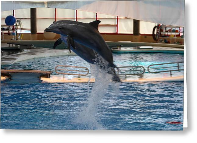 Dolphin Show - National Aquarium In Baltimore Md - 1212248 Greeting Card by DC Photographer