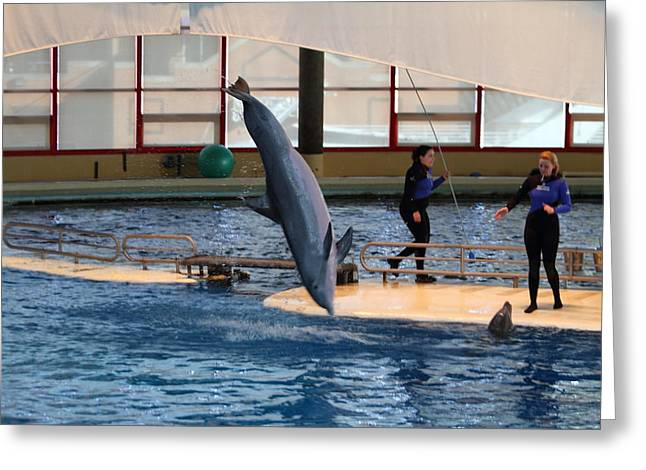 Dolphin Show - National Aquarium In Baltimore Md - 121226 Greeting Card by DC Photographer