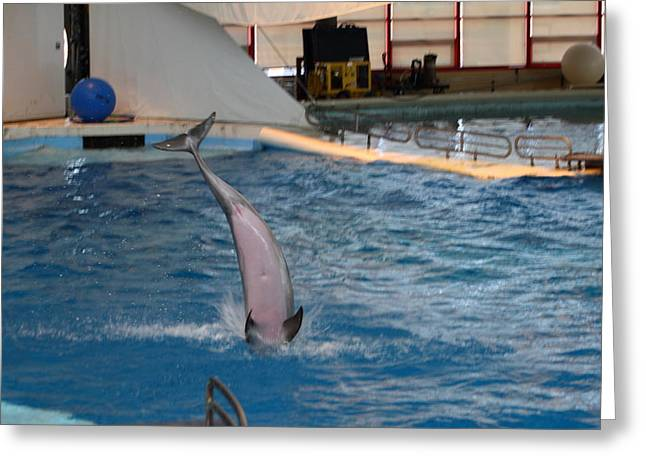 Dolphin Show - National Aquarium In Baltimore Md - 1212269 Greeting Card