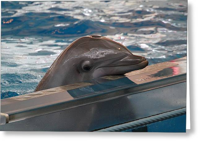Dolphin Show - National Aquarium In Baltimore Md - 1212279 Greeting Card by DC Photographer