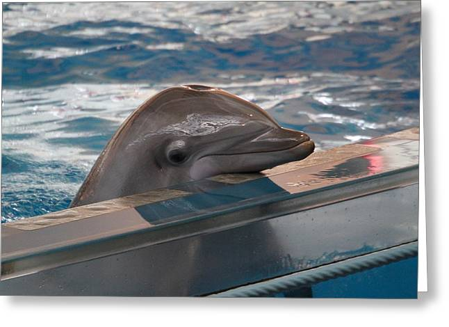 Dolphin Show - National Aquarium In Baltimore Md - 1212280 Greeting Card by DC Photographer