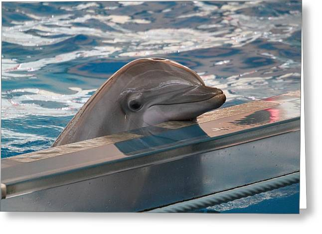 Dolphin Show - National Aquarium In Baltimore Md - 1212281 Greeting Card