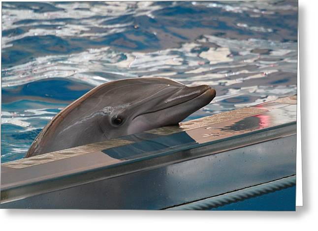 Dolphin Show - National Aquarium In Baltimore Md - 1212282 Greeting Card by DC Photographer