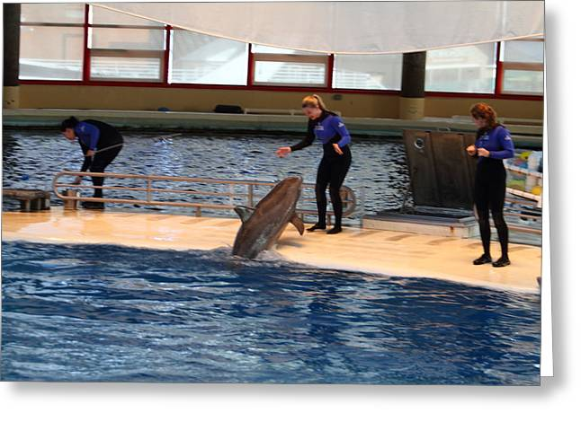 Dolphin Show - National Aquarium In Baltimore Md - 121231 Greeting Card by DC Photographer