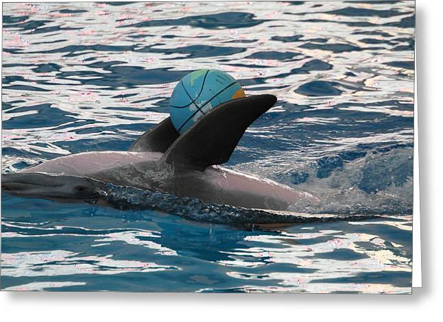 Dolphin Show - National Aquarium In Baltimore Md - 121234 Greeting Card by DC Photographer