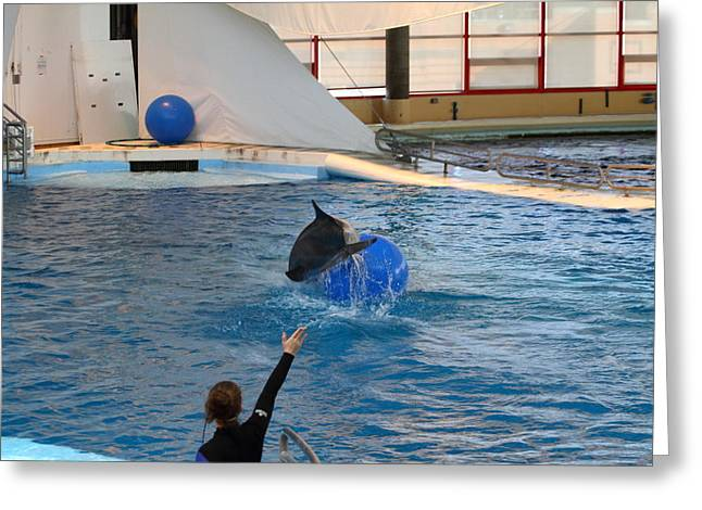 Dolphin Show - National Aquarium In Baltimore Md - 121241 Greeting Card by DC Photographer