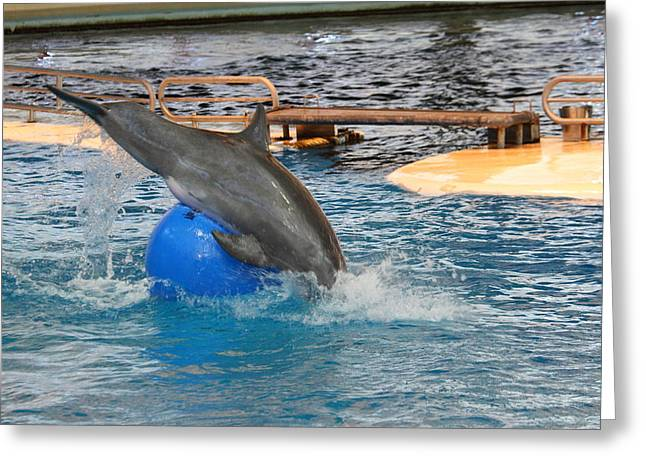 Dolphin Show - National Aquarium In Baltimore Md - 121242 Greeting Card by DC Photographer