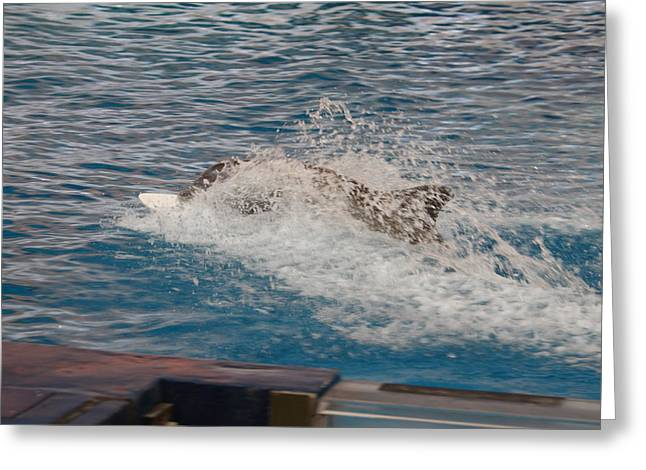 Dolphin Show - National Aquarium In Baltimore Md - 121250 Greeting Card by DC Photographer