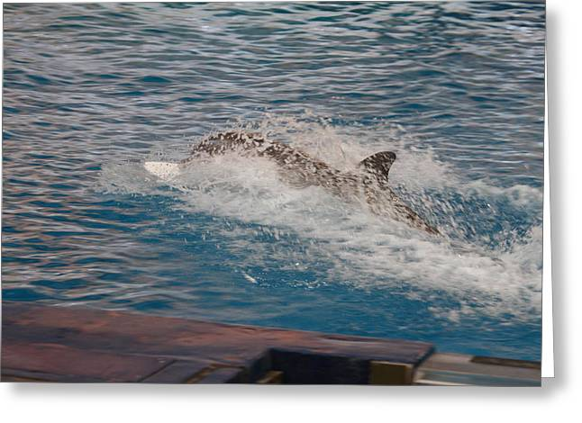 Dolphin Show - National Aquarium In Baltimore Md - 121251 Greeting Card