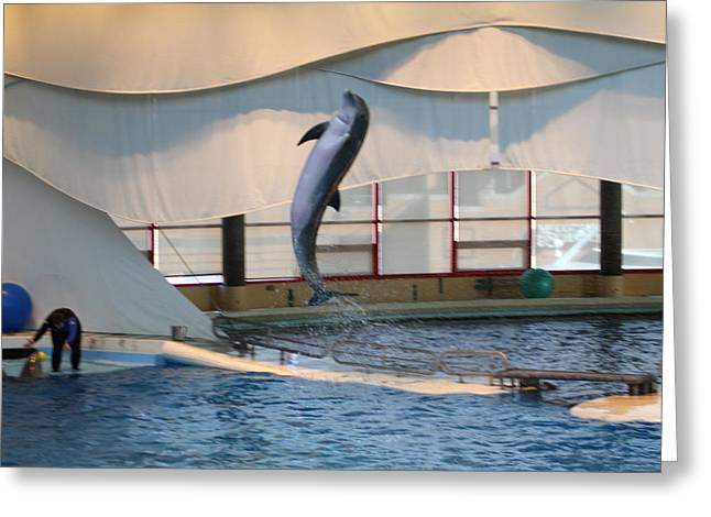 Dolphin Show - National Aquarium In Baltimore Md - 121254 Greeting Card by DC Photographer