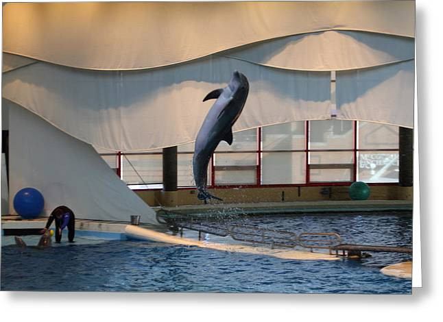 Dolphin Show - National Aquarium In Baltimore Md - 121255 Greeting Card