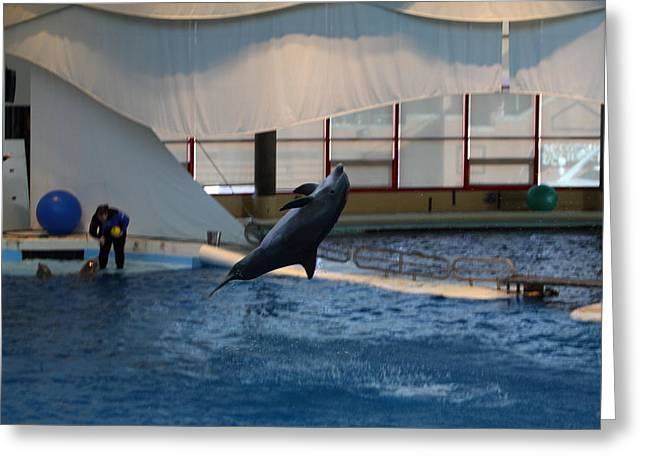 Dolphin Show - National Aquarium In Baltimore Md - 121257 Greeting Card by DC Photographer